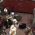 Pflegekatzen Manuela, Rumänien Orastie