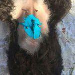 rumänischer Straßenhund wurde kastriert