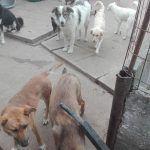 Hunde auf der Farm Rumänien