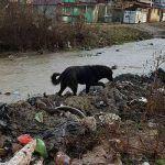 Fütterung der Hunde in Rumänien