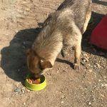 Tierschutz Hund Rumänien Baustelle Füttterung