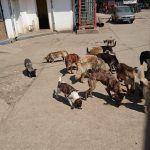 Pflegestelle für Straßenhunde in Rumänien, Fütterung