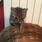 Kitten von Manuela in Rumänien