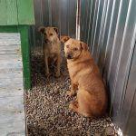 Bewohner des privaten Shelters Rumänien, Orastie