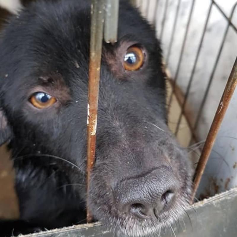 Tötung Rumänien Hund Tierschutz