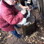 Tierschutz Faltbuch Impfung Welpe