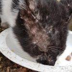 Faltbucht Tierschutz Katze Räude