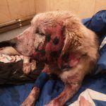 Faltbuch Tierschutz OP Hund
